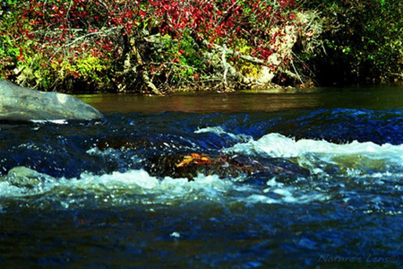 Clear Creek IIThe radiant blue of the water was amazing 